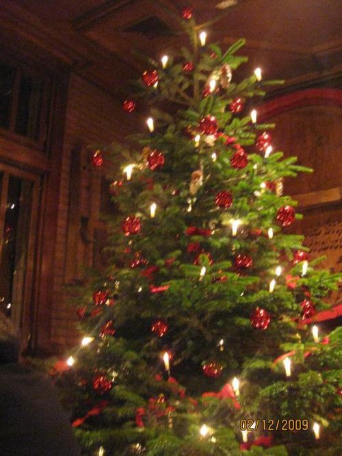 Germanys next Weihnachtsbaum